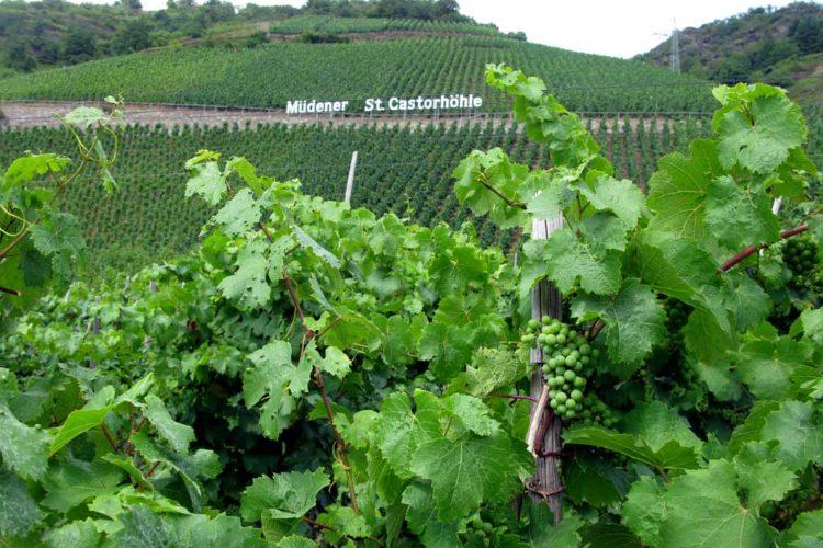 Druer til vin – Moseldalen